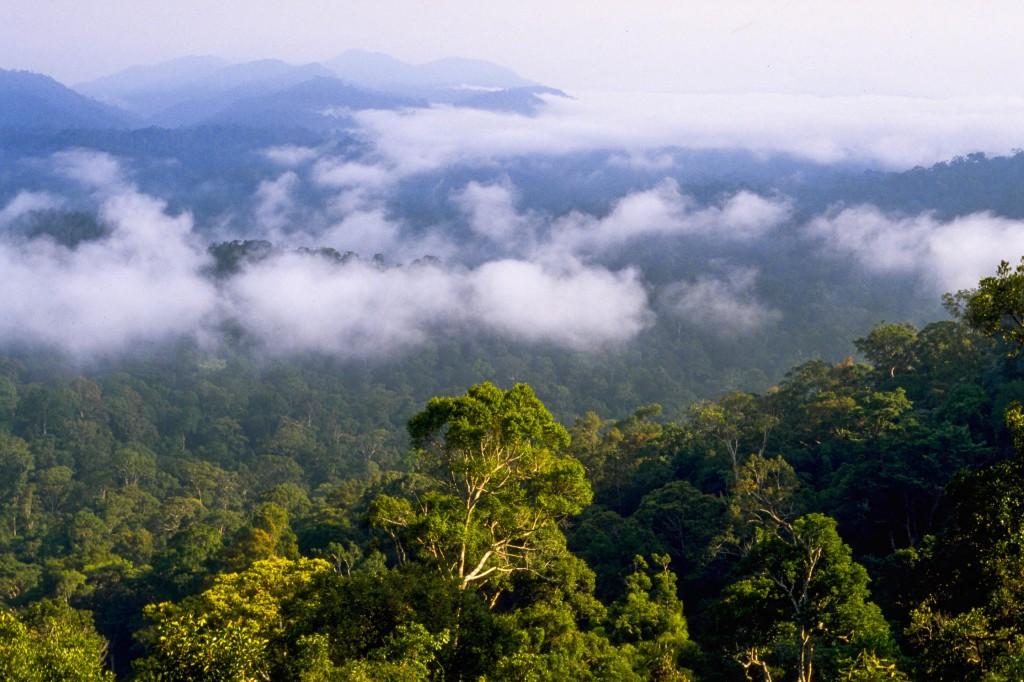 1000 - Hvad er en regnskov?