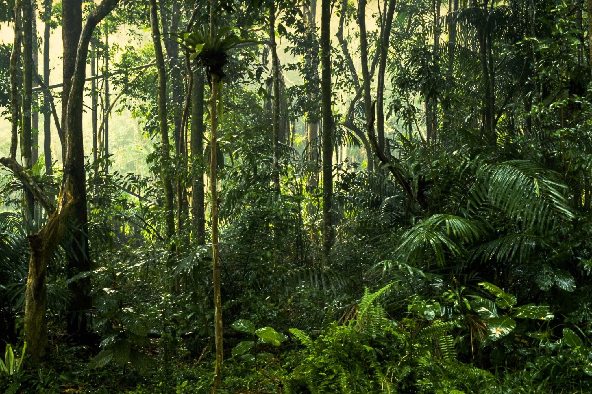 planter og træer