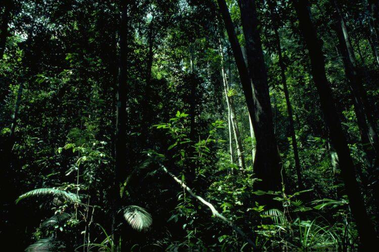 Skovbundens planter