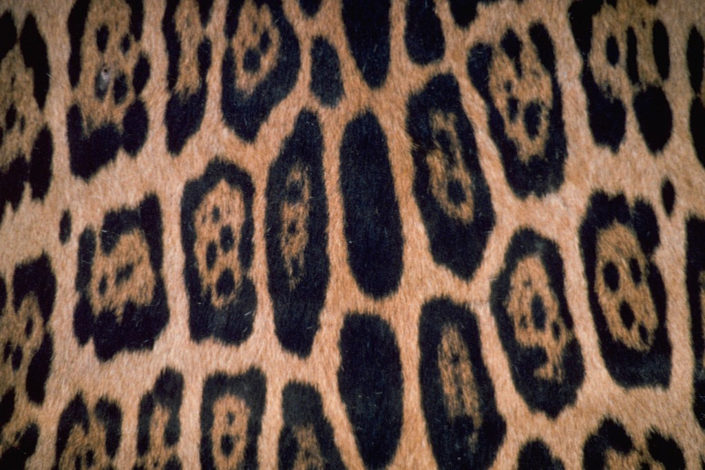 B Jaguar IMG RT