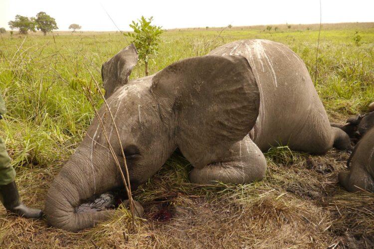 Truede elefanter