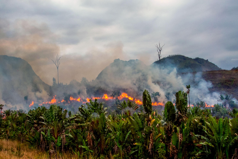 6000 - Den truede regnskov