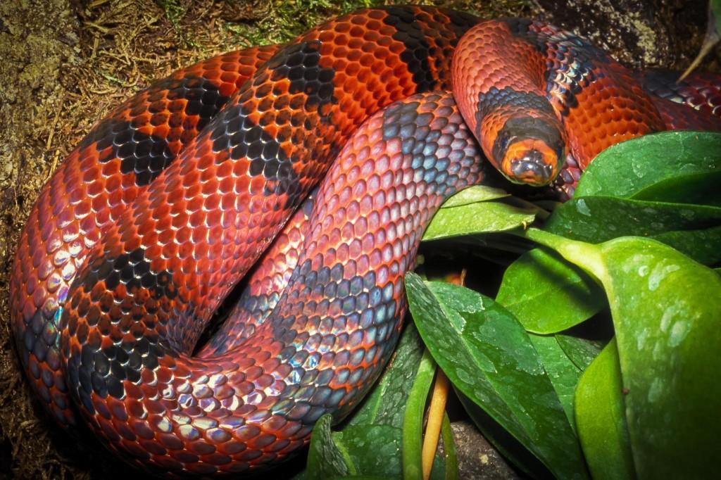 slanger-1456-IMG0008-a