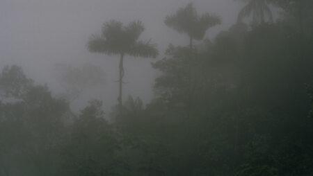 Regn og fordampning