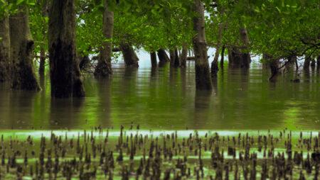 Oversvømmede skove