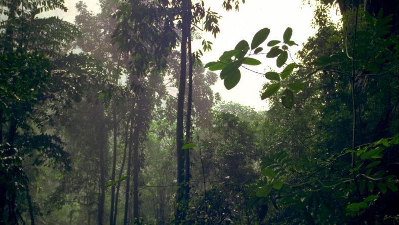 Løvfældende skove