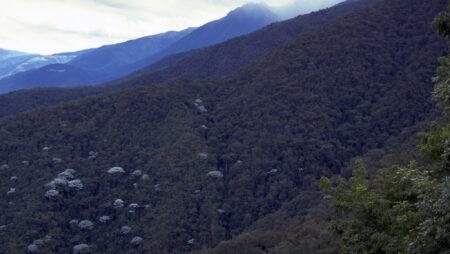Bjergregnskove