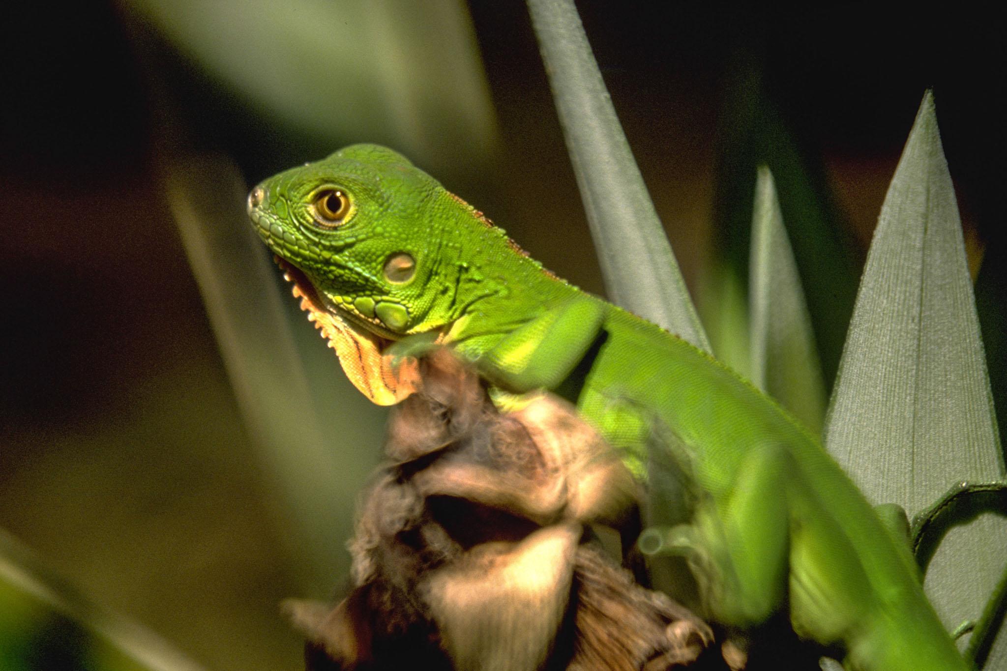 truede dyrearter i regnskoven