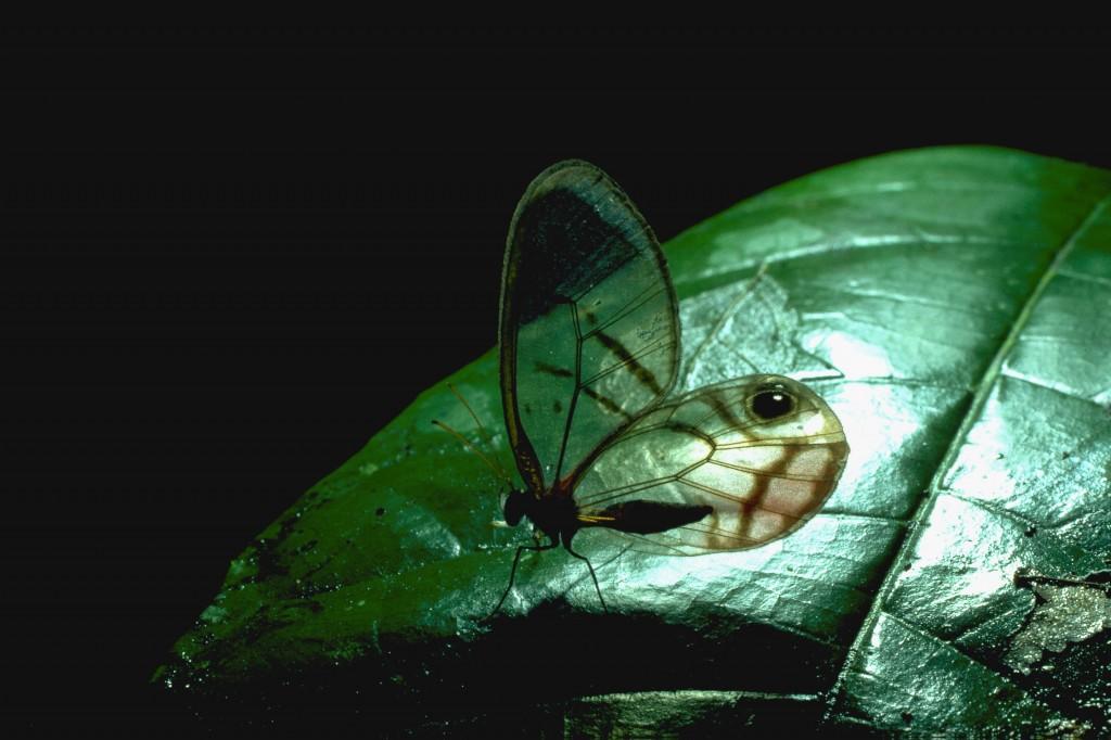 5240-Insekter-generelt-3879-IMG0021