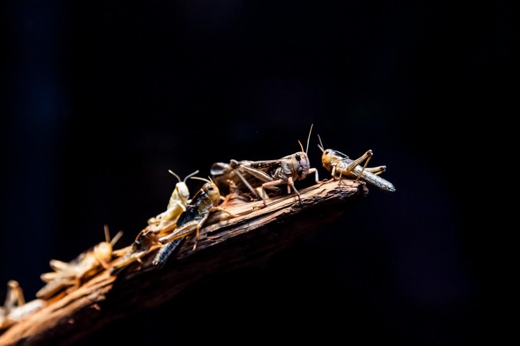 5240-Insekter_MG_6438