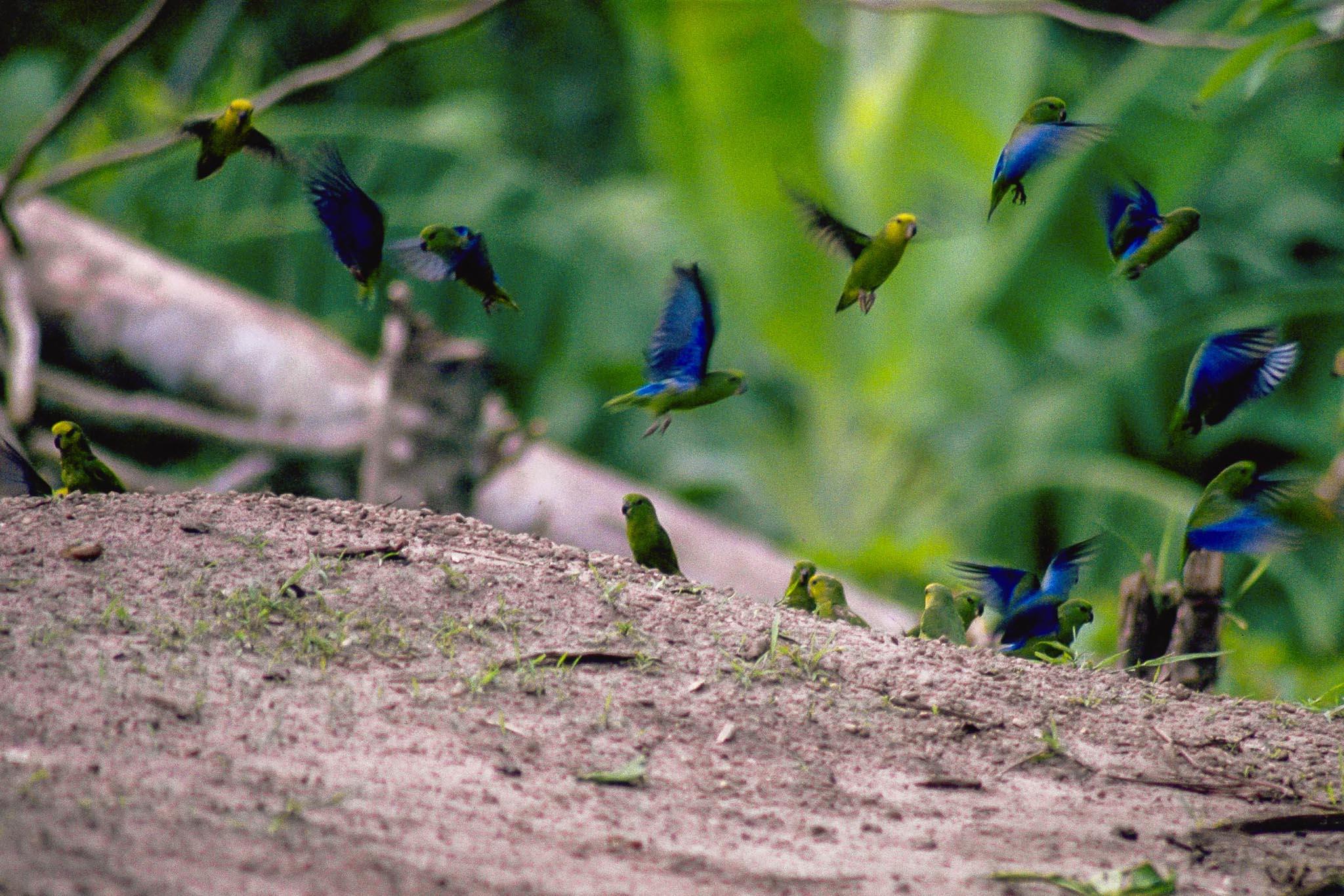 hvilke fugle har kråse