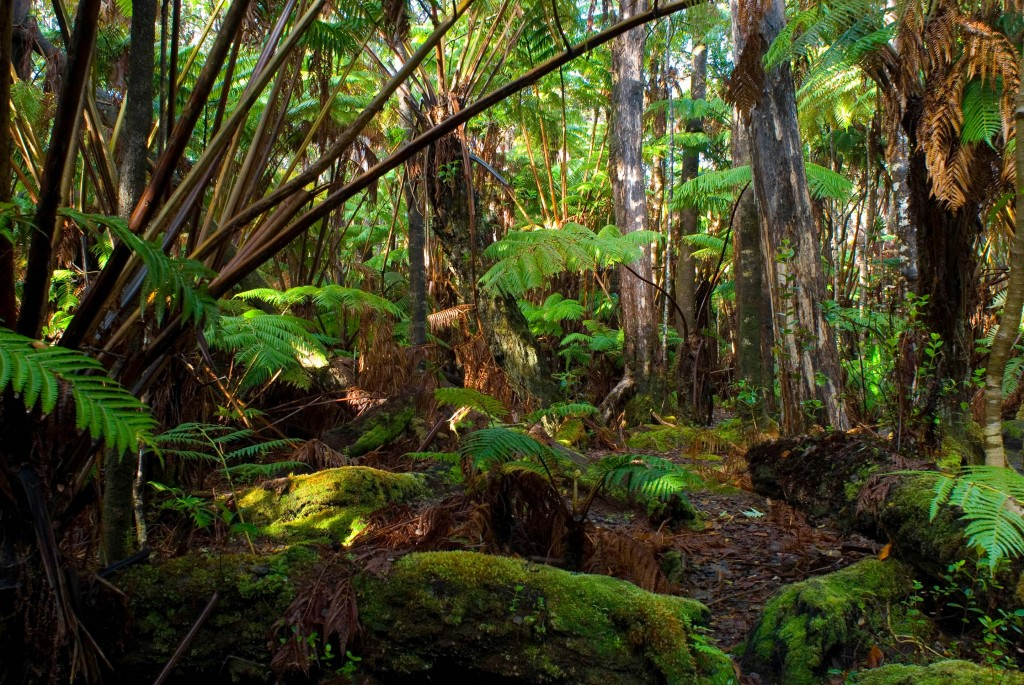 skovbunden RT