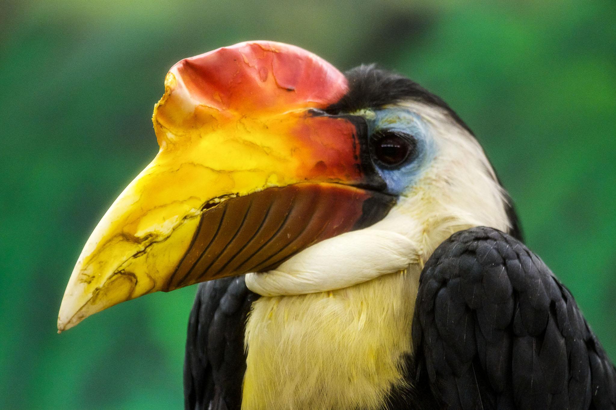 afrikanske fugle