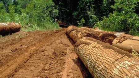 Tømmerhugst