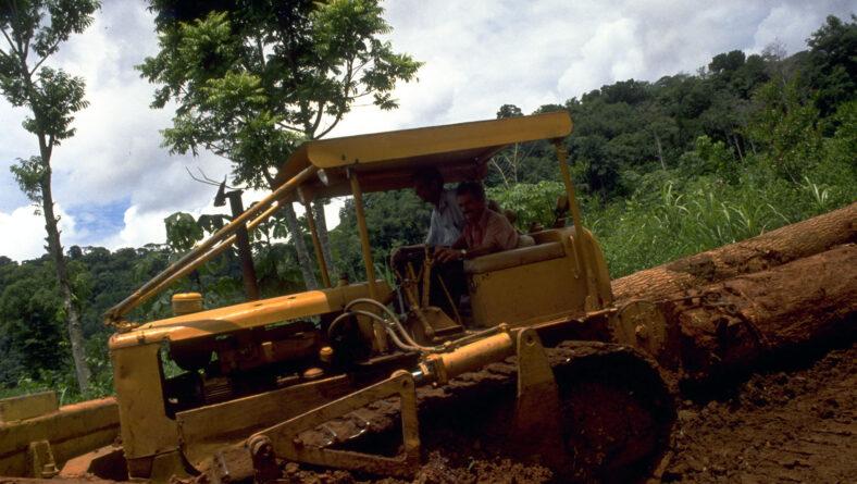 Tømmerarbejderen på Borneo