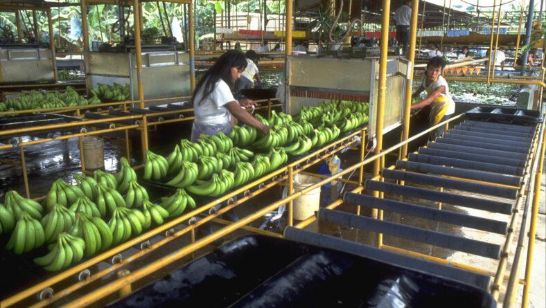 Bananarbejderen i Costa Rica