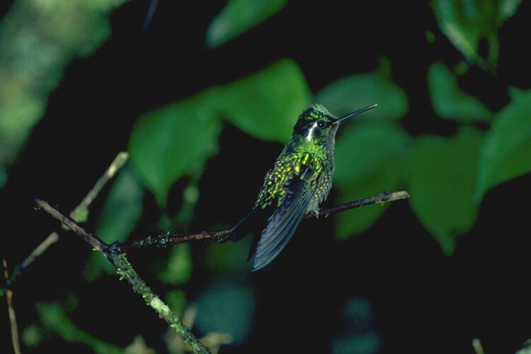 Kolibri og solfugl som nektarædere