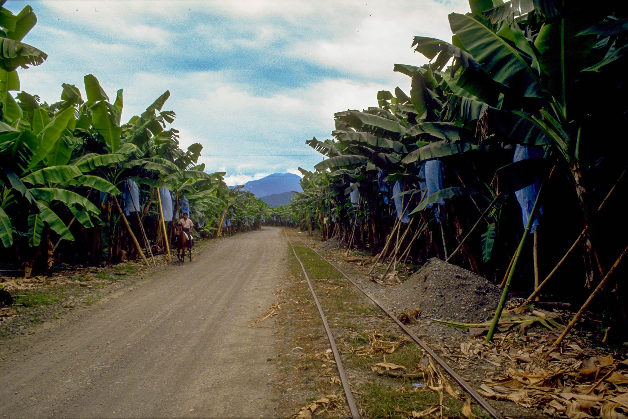 Plantager truer regnskovene
