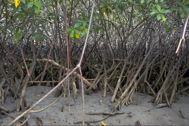 største grund til fældning af regnskov