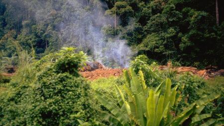 Sekundær regnskov