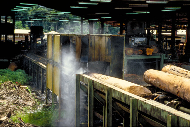 Bæredygtigt skovbrug i Guyana