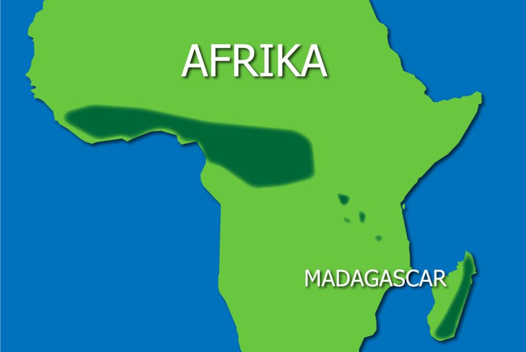 Regnskove Afrika udsnit