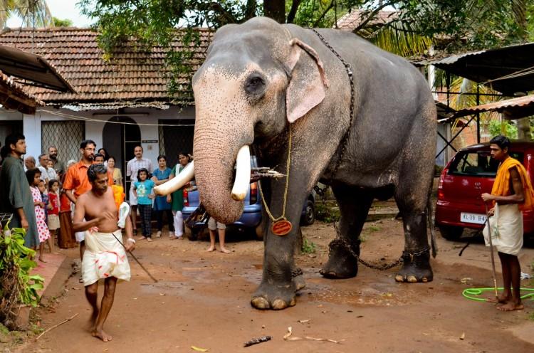 Elefant i Sydøstasien