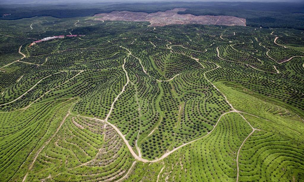 oliepalmeplantager i indonesien