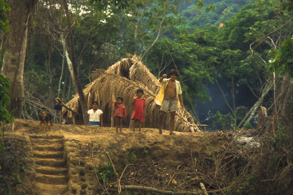 regnskovsprojekter IMG